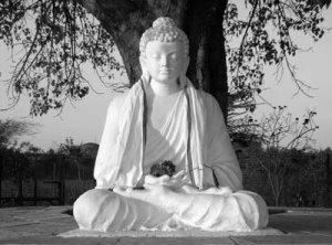 buddha-bodhi